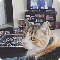 Adopt A Pet :: Kleo (COURTESY POST) - Baltimore, MD