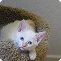 Adopt A Pet :: Mason - Davis, CA