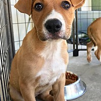 Adopt A Pet :: Keely - St. Francisville, LA