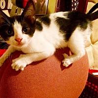 Adopt A Pet :: Piper - Philadelphia, PA