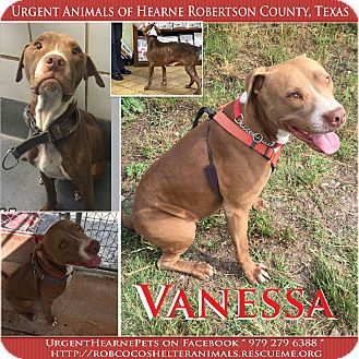 American Staffordshire Terrier/American Pit Bull Terrier Mix Dog for adoption in Hearne, Texas - Vanessa