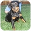 Photo 4 - Rottweiler Dog for adoption in Tracy, California - Ruby