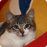 Adopt A Pet :: Laney (LE) - Little Falls, NJ