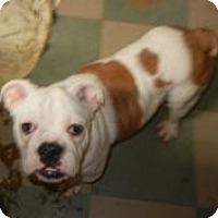 Adopt A Pet :: Emma ADOPTED!! - Antioch, IL