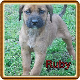 Shepherd (Unknown Type) Mix Puppy for adoption in Haggerstown, Maryland - Ruby