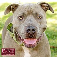 Adopt A Pet :: Valley - Marina del Rey, CA