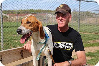 Treeing Walker Coonhound Mix Dog for adoption in Elyria, Ohio - Millie
