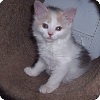 Adopt A Pet :: Patches - Richmond, VA
