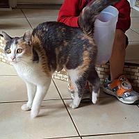 Adopt A Pet :: Clementine - Minot, ND