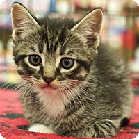 Adopt A Pet :: Phillip - Great Falls, MT