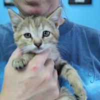Adopt A Pet :: Ginger - Robinson, IL