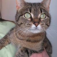 Adopt A Pet :: Rockstar - Menomonie, WI