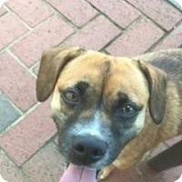 Adopt A Pet :: Buttercup - Monroe, NC