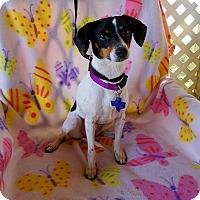 Adopt A Pet :: Waverly - Toronto, ON