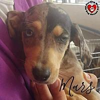 Adopt A Pet :: Little Mars - Joliet, IL