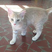 Adopt A Pet :: Peter - Youngsville, NC