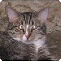 Adopt A Pet :: Studs - Lombard, IL