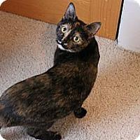 Adopt A Pet :: Maple - Grand Rapids, MI
