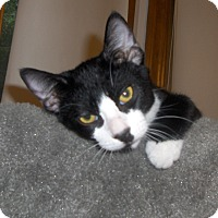 Adopt A Pet :: Chaz - Richmond, VA
