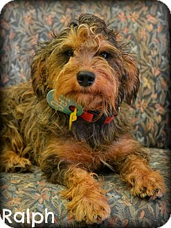 Terrier (Unknown Type, Small) Mix Dog for adoption in Beaumont, Texas - Ralph