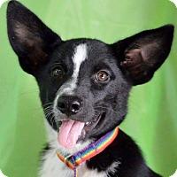 Adopt A Pet :: Rodeo - Hamburg, PA