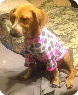 Hound (Unknown Type) Mix Dog for adoption in Jacksonville, North Carolina - Maisy