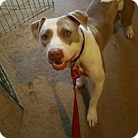 Adopt A Pet :: Cinderella - Bakersfield, CA