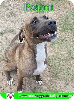 Shepherd (Unknown Type) Mix Dog for adoption in Pensacola, Florida - Peanut