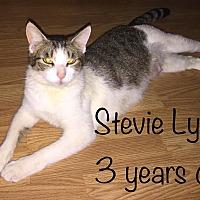 Adopt A Pet :: STEVIE LYNN - Malvern, AR