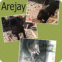 Adopt A Pet :: Arejay - Hearne, TX