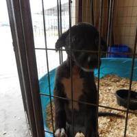 Adopt A Pet :: Lottie - Opelousas, LA