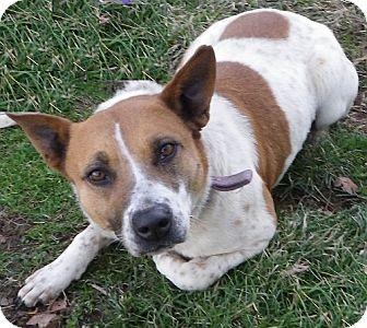 Shepherd (Unknown Type) Mix Dog for adoption in Metamora, Indiana - Sweetie