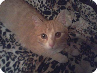 Domestic Shorthair Cat for adoption in Parkton, North Carolina - Sweet Pea