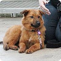 Adopt A Pet :: Kumi - Saskatoon, SK