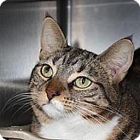 Adopt A Pet :: Maggie - St. Petersburg, FL