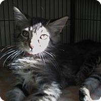 Adopt A Pet :: Frisco - Shelton, WA