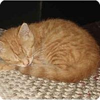 Adopt A Pet :: Orlando - Davis, CA