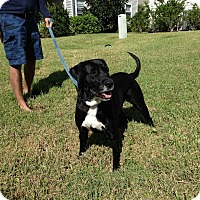 Adopt A Pet :: Missy - Largo, FL