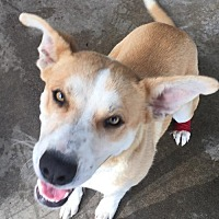 Adopt A Pet :: Marky - Fresno, CA