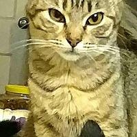 Adopt A Pet :: Junior - Texarkana, AR