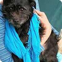 Adopt A Pet :: Whitney - Baileyton, AL
