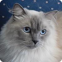 Adopt A Pet :: Zeus - Davis, CA