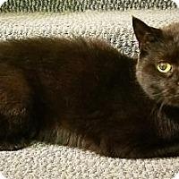 Adopt A Pet :: Sammy - West Des Moines, IA