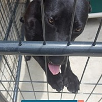 Adopt A Pet :: Horatio - Marianna, FL
