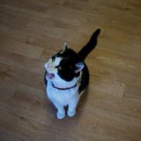 Adopt A Pet :: Terrence - Alpena, MI