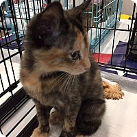 Adopt A Pet :: Tiki - Mansfield, TX