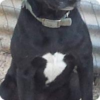 Adopt A Pet :: Zion - Grand Rapids, MI