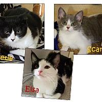 Adopt A Pet :: Elsa, Sweetie, Scarlett - Fairfax, VA