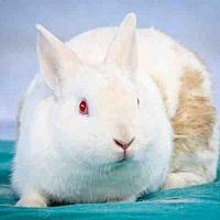 Adopt A Pet :: JERSEY - Gardena, CA