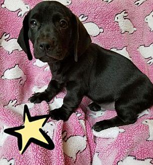Hound (Unknown Type)/Terrier (Unknown Type, Medium) Mix Puppy for adoption in Colton, California - 7 RONNIE